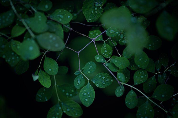 ポートランド‐自然-ウェディング‐海外‐挙式‐フォトグラファー